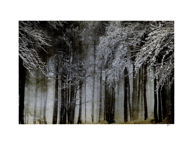 - winterwald II -