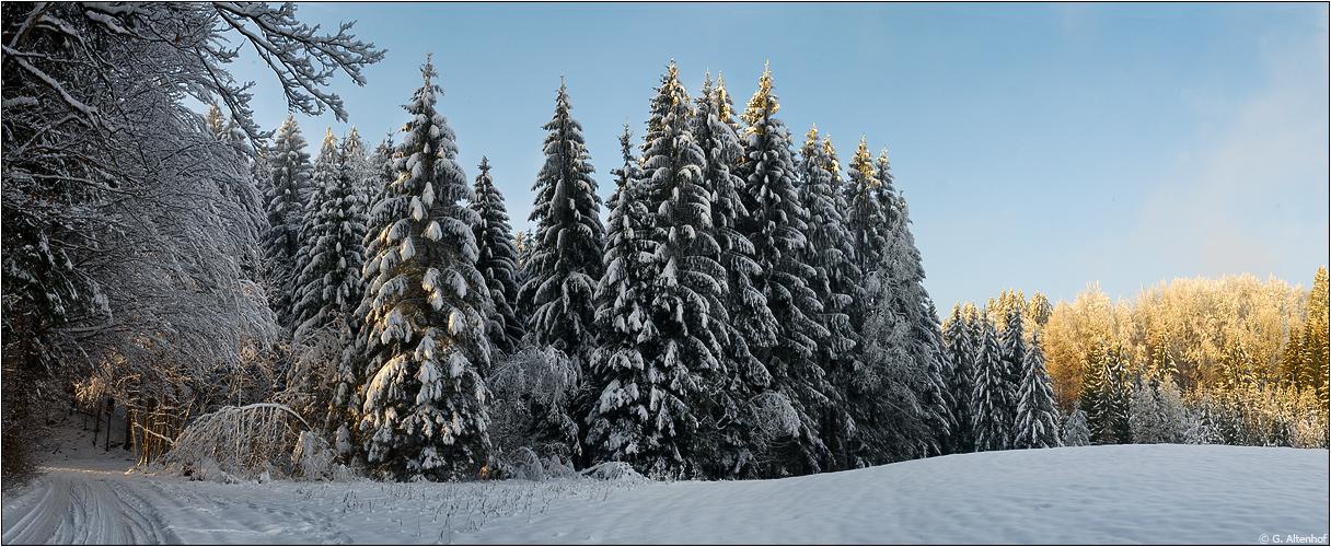 Winterwald II