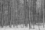 Winterwald II - nachbearbeitet
