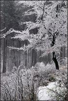 Winterwald III