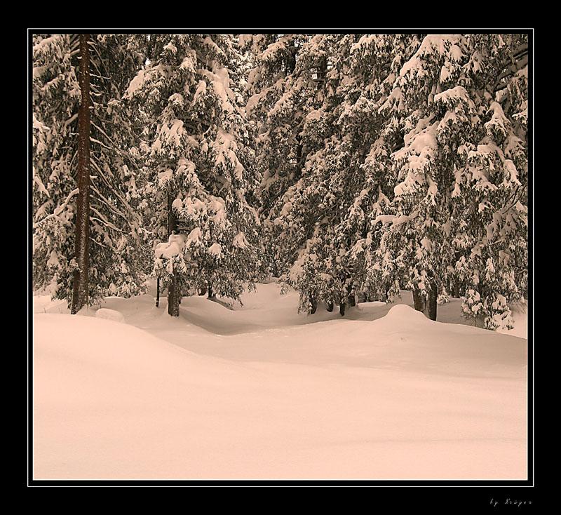 Winterwald im Abendrot