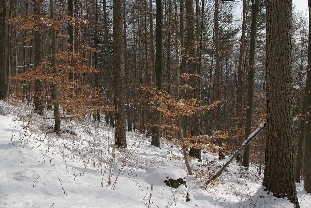 Winterwald im Februar