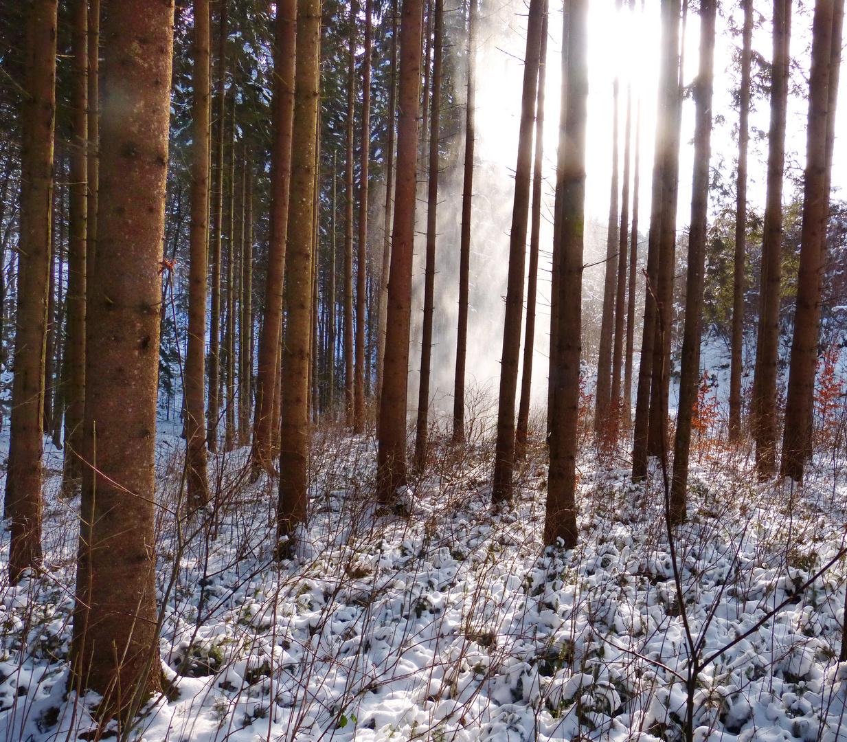 Winterwald im Hegau