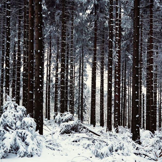 Winterwald im Sauerland