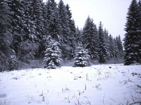 Winterwald im Siegerland 2005