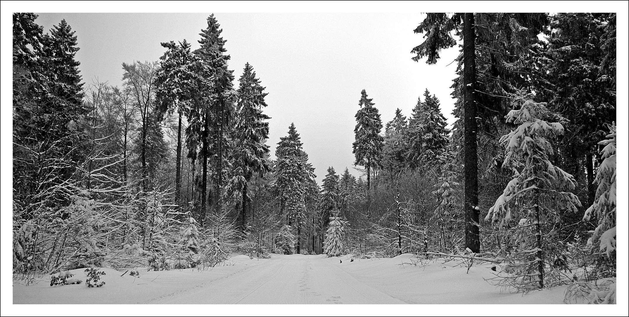 Winterwald im Vogelsberg