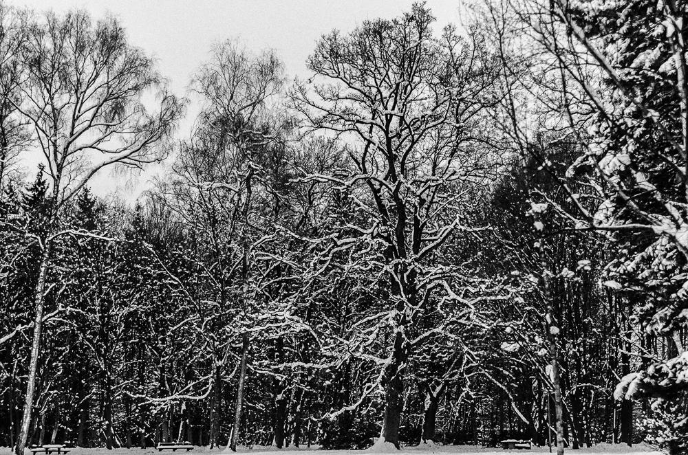 Winterwald in der Stadt