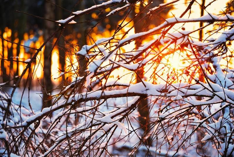 Winterwald in Kevelaer