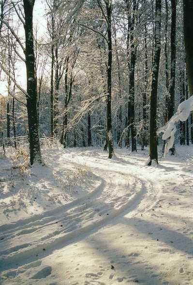 Winterwald in Mecklenburg