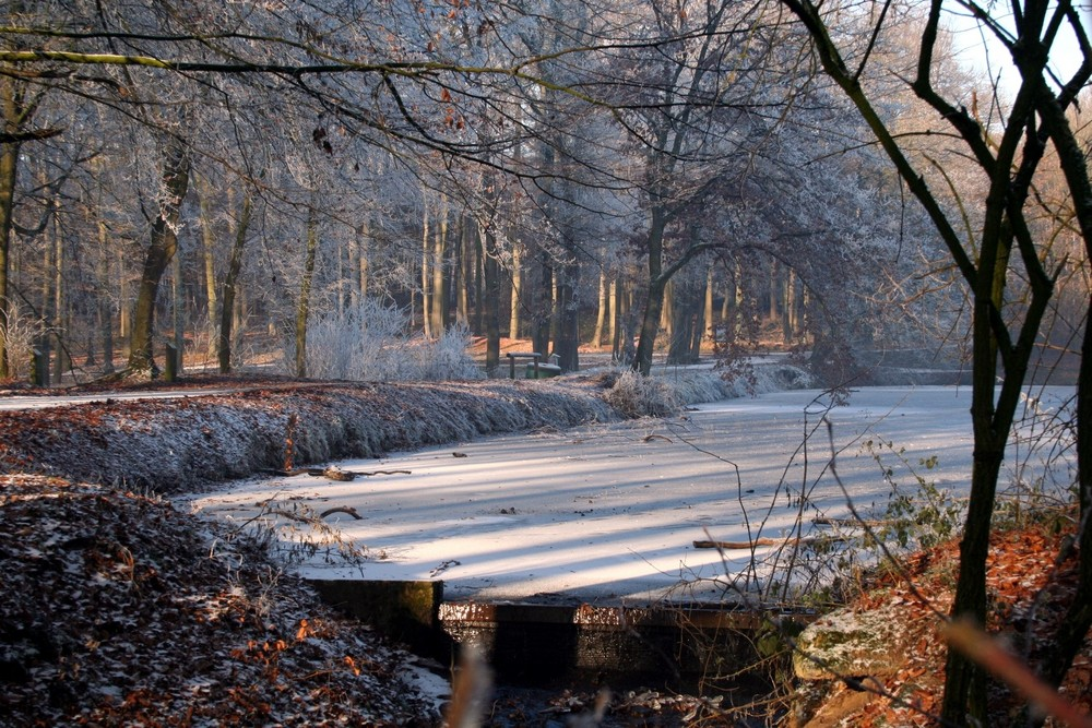 Winterwald Raesfeld 2