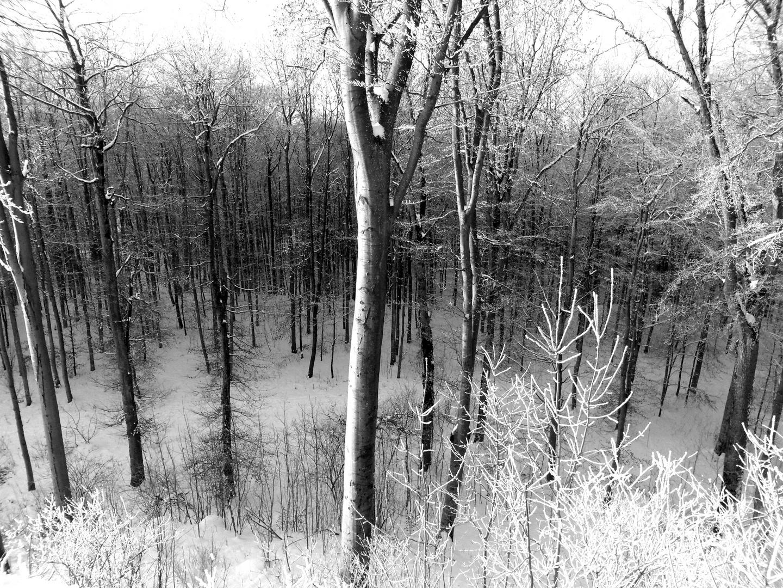 winterwald schwarz wei foto bild jahreszeiten winter wald bilder auf fotocommunity. Black Bedroom Furniture Sets. Home Design Ideas