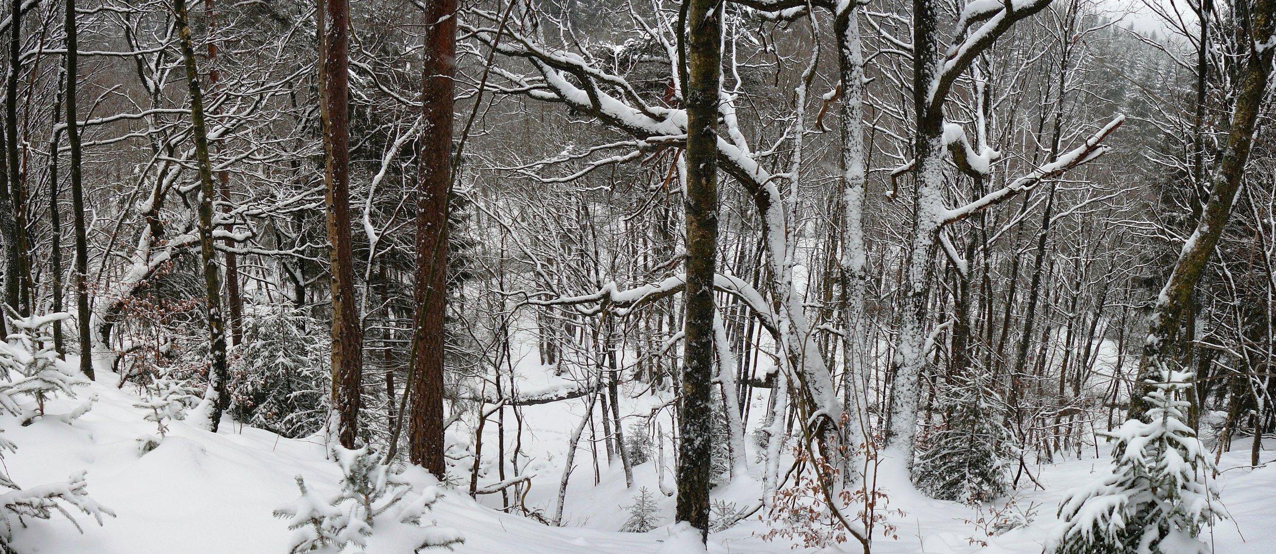 Winterwald - und man sieht gar nicht, dass es steil nach unten geht...