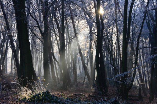 Winterwald_1