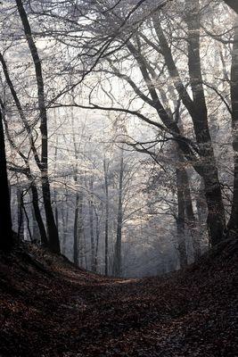 Winterwald_3