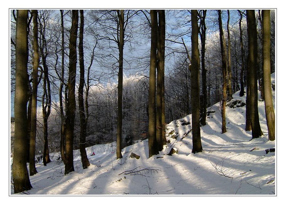 Winterwaldblick ...