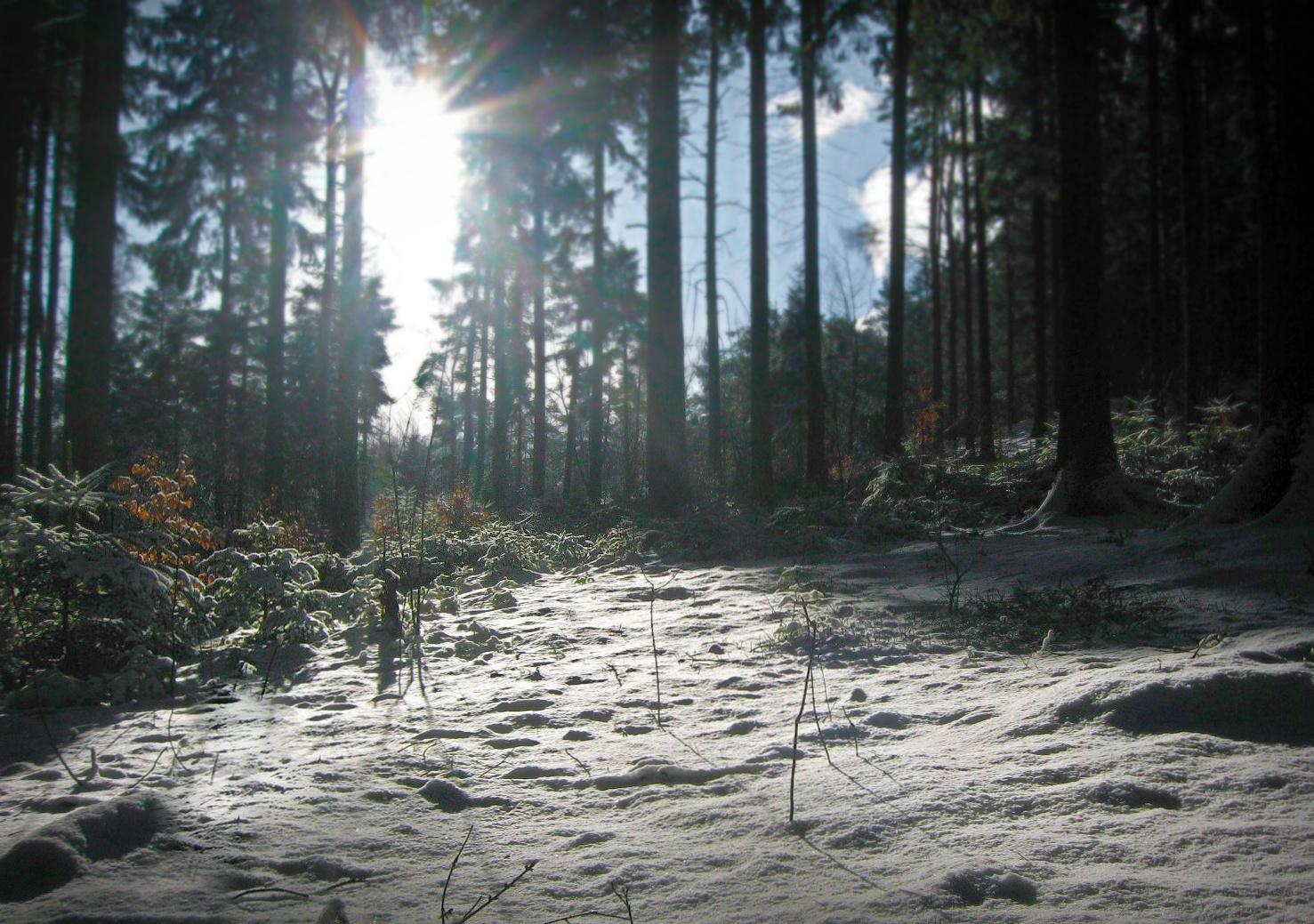 Winterwaldkontraste
