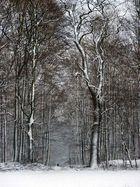 Winterwaldweg