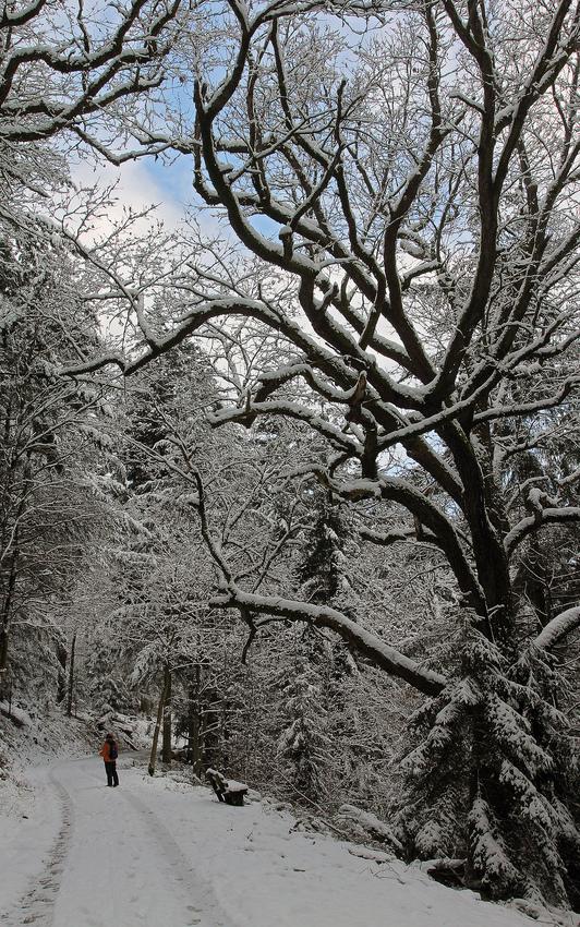 Winterwaldweg 2