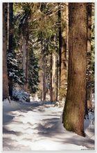 Winterwege,