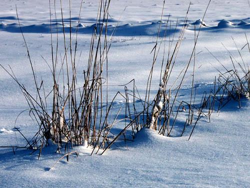 Winterweideland