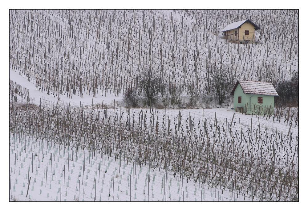 Winterweinberge II