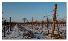 Winterweingarten