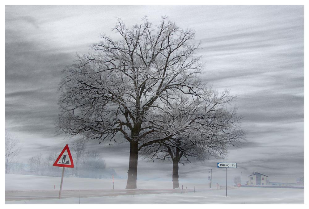winterweis