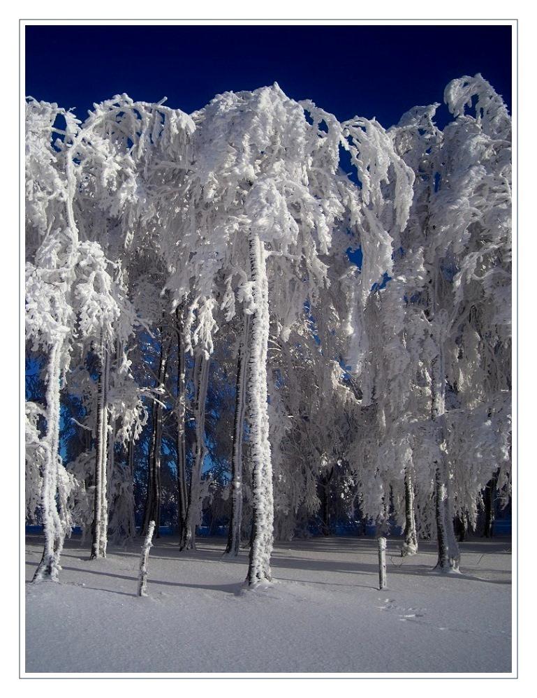 Winterwelt 4