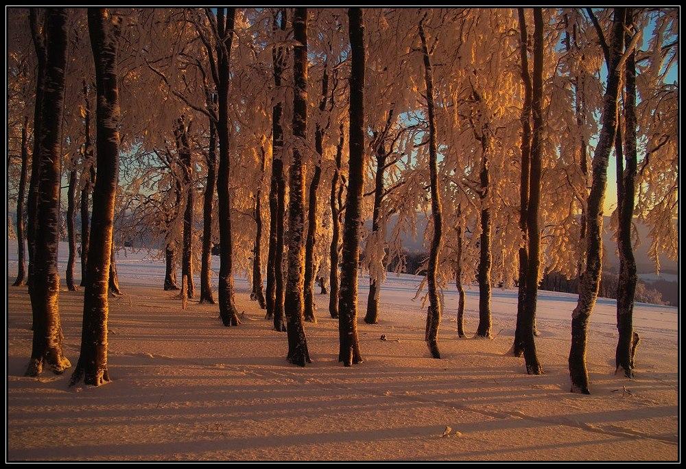 Winterwelt 5