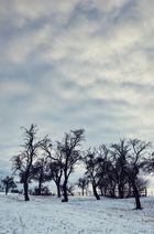 | WinterWiese|