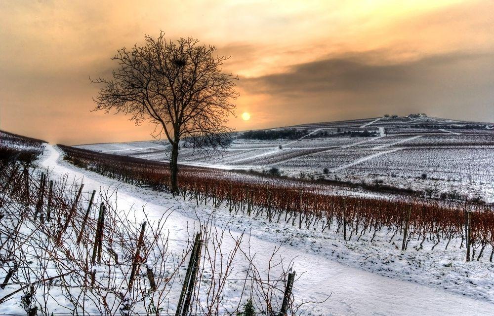 Winterwingertsbaum von Thomas T Renner