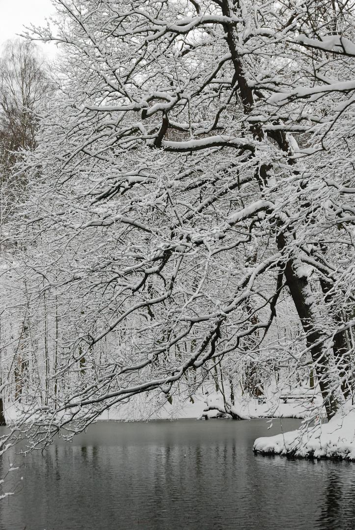 Winterwonderland 3