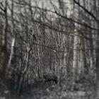 winterwoods