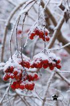 Winterwunderland :)