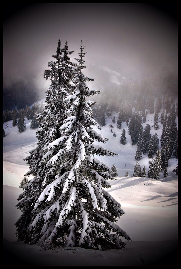 Winter_Wunder_Land