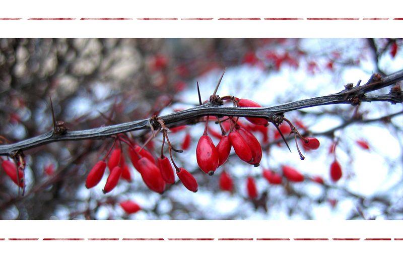 Winterwunderland mit roten Punkten