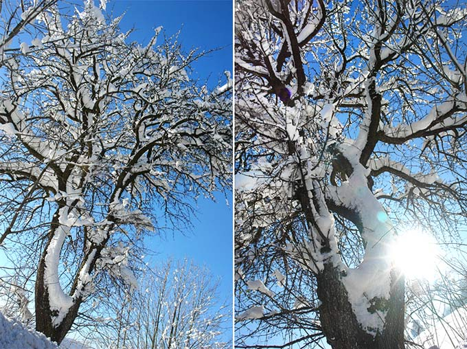 * WinterWunderWaldWeitWinkel *