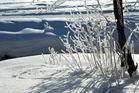 Winterwunderwelt 3