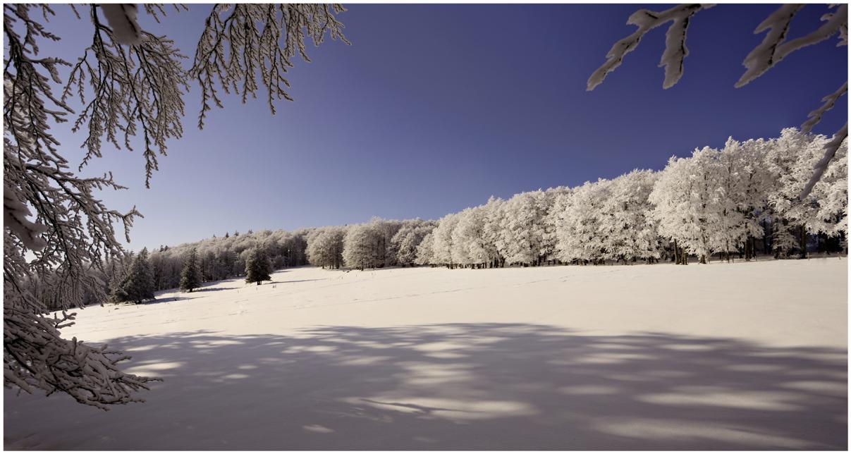 Winterwunderwelt...