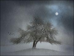 winter.wunder,welt