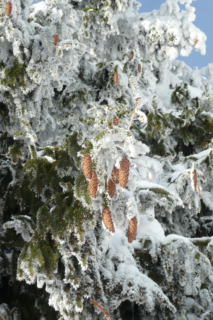 Winterzapfenzauber
