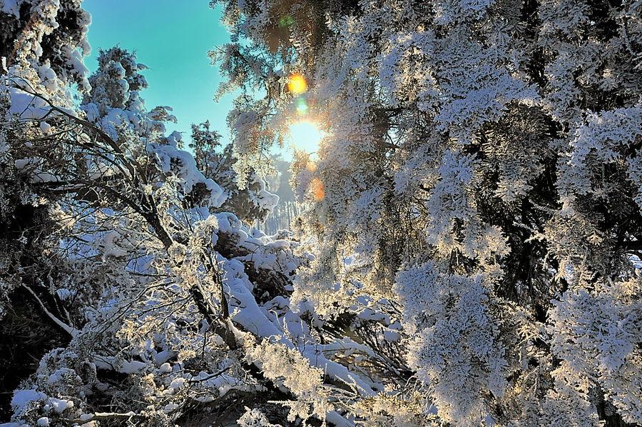 Winterzauber (1)