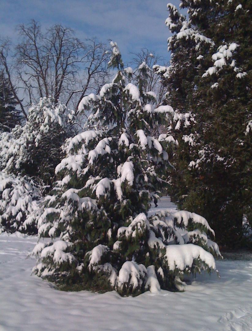 Winterzauber ....