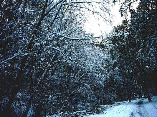 ,.-+~*|Winterzauber|*~+-.,