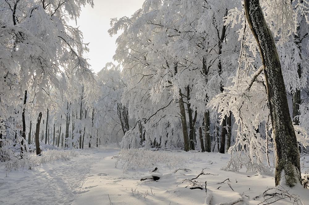 *Winterzauber am Erbeskopf*