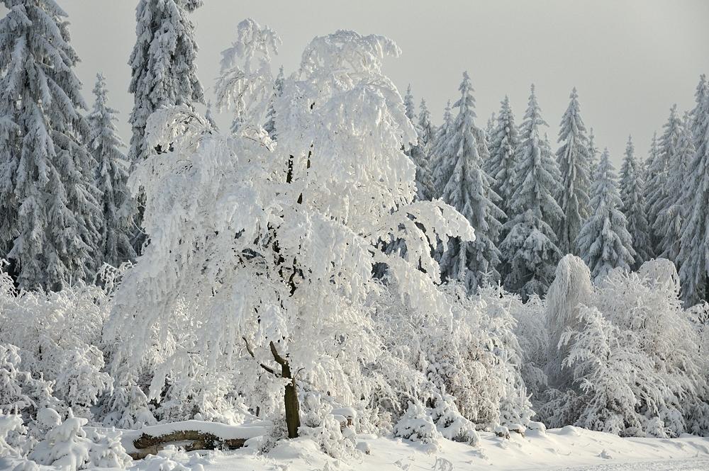 *Winterzauber am Erbeskopf V*