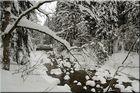 Winterzauber an der Elbequelle 3