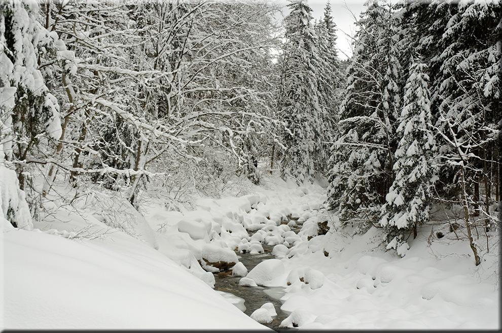 Winterzauber an der Elbequelle
