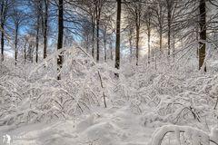 ***Winterzauber***