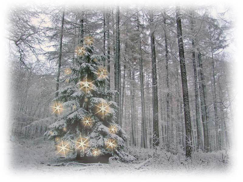 *** Winterzauber ***